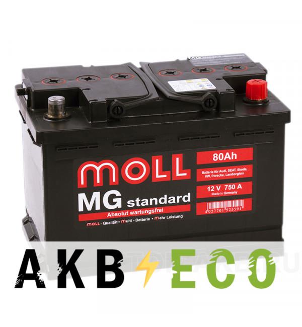 Автомобильный аккумулятор Moll MG Standard 80R 750A 276x175x190